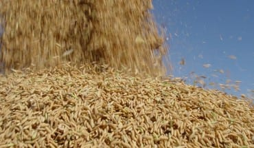 arroz em casa - foto robispierre giuliani